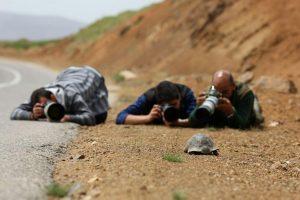 مسعود رحیمی- عکس تفسیری- نقش اول